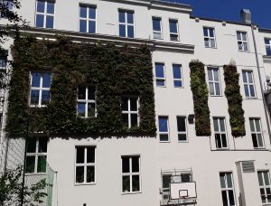 Fassadenbegrünung Innenhof GRG7-Kandelgasse Wien